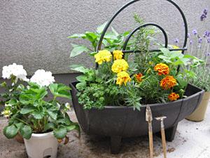 Petit_garden